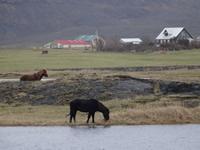 Quelques jours en Islande